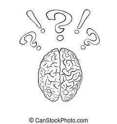 exclamación, cerebro, signo de interrogación