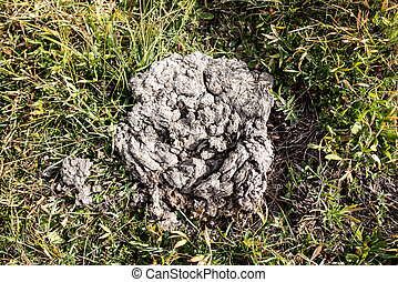 excrement of a cow, natural fertilizer
