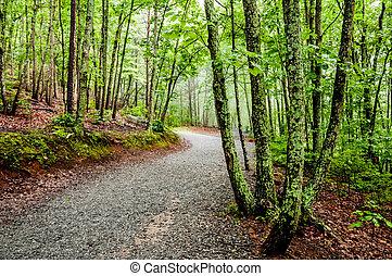 excursionismo, bosque, por, sendero bosque, grueso
