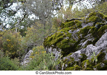 excursionismo, en, sierra, de, grazalema, natural, parque,...