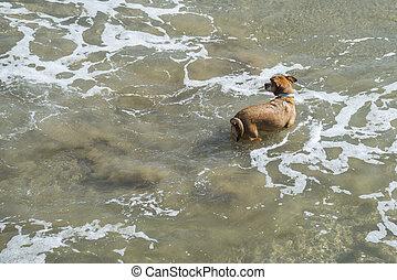 executando, cão, mar