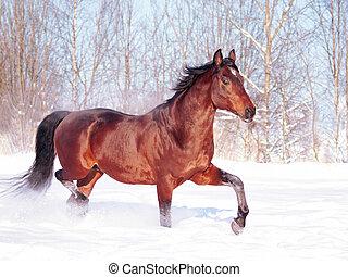 executando, campo, cavalo, neve, baía