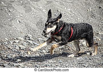 executando, filhote cachorro