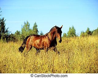 executando, ladre cavalo