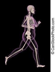 executando, médico, mulher, excesso de peso, esqueleto