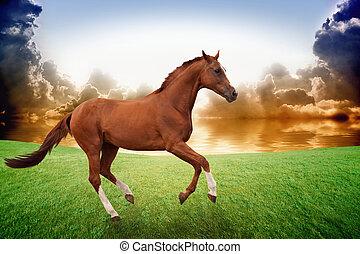 executando, pôr do sol, cavalo