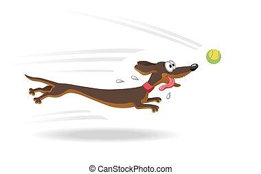 executando, tênis, cão, ball., bassê