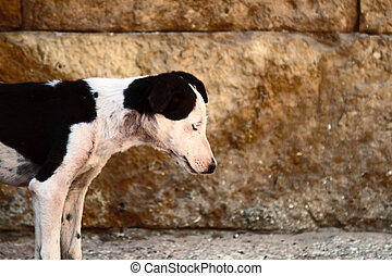 Exhausted by hunger of stray dog. Rescue and shelters for ...