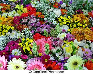 exibição, flores