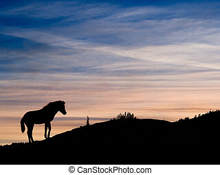 Exmoor pony sunset, Devon, United Kingdom. - Summertime.