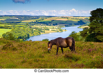 Exmoor Pony Wimbleball Lake - Pony at Wimbleball Lake Exmoor...
