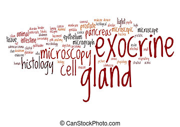 Exocrine gland word cloud concept
