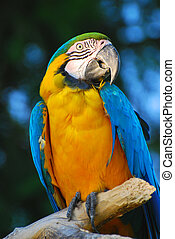 exotic african parrot