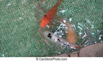 exotic Aquarium fishes swim