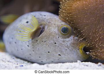 exotic Ball fish