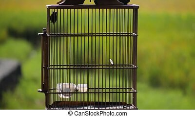 exotic bird in a cage