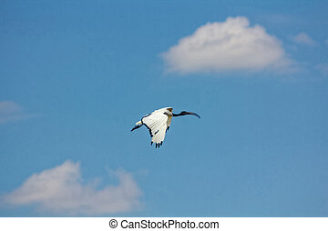 exotic bird in flight