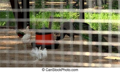 Exotic birds drinking and eating. View through cage bars....
