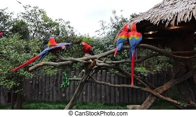 Exotic Birds in Shanghai Zoo. Slow Motion Footage.