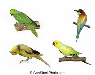Exotic birds isolated