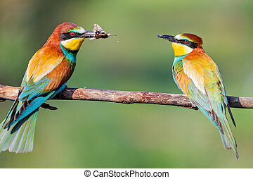 exotic birds of paradise on a spring branch...