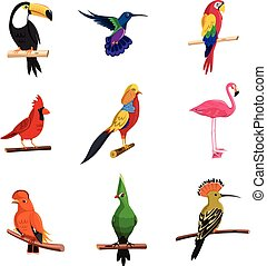 Exotic Birds Set - Exotic birds set with toucan parrot and...