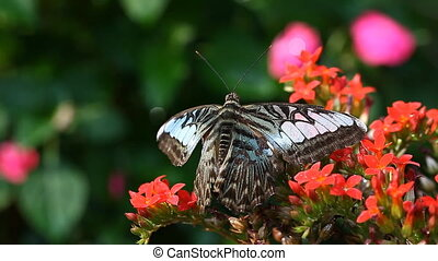 Exotic Butterfly close-up in a tropical garden