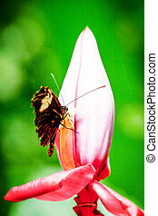 Exotic Butterfly In Amazonia