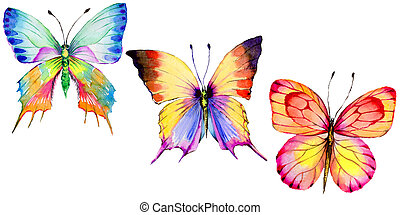 Exotic  butterfly wild insect in a watercolor style isolated.