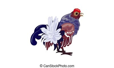 Exotic chicken icon animation best object on white background