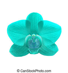 exotic color orchid flower - exotic blue color orchid flower...