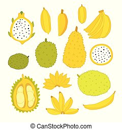 Exotic colorful tropical fruits collection isolated on white background