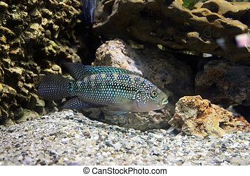 Exotic fish in an aquarium tank