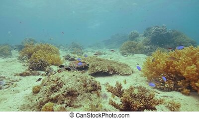 Exotic fish swimming near coral reef on sea bottom....