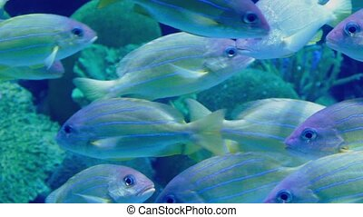Exotic Fish Swimming Near Reef