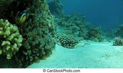 exotic fish, underwater world