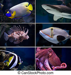 Exotic fishes - Beautiful tropical fish collection