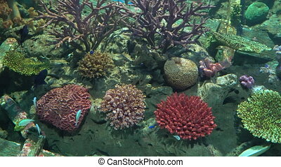 Exotic fishes in the aquarium with colorful coral reef