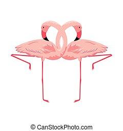 exotic flemish couple birds vector illustration design