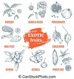 Exotic Fruits collection. Hand drawn vector illustration