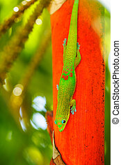 Tropical Lizard