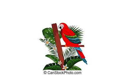 exotic guacamaya bird tropical animation , hd video