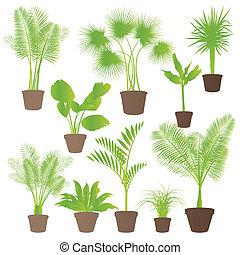 Exotic jungle bushes grass, reed, palm tree wild plants set...