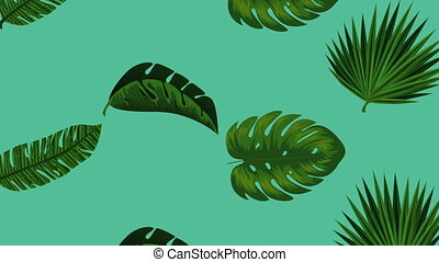 exotic leafs palms tropical pattern , hd video animation