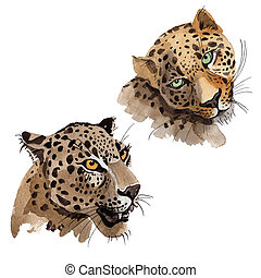 Exotic leopard wild animal in a watercolor style isolated....