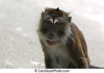 Exotic monkey in Boracay - Exotic animals, tropical...