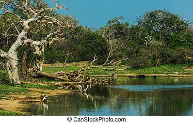 Sri Lanka - Exotic nature in the jungles of Sri Lanka