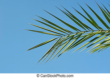 Exotic Palm sunday concept: Leaves frame of coconut branches with cloudy blue sky background