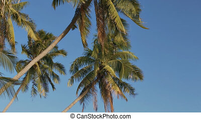 Exotic Palm Trees Wave under Wind Breath on Shore - closeup...