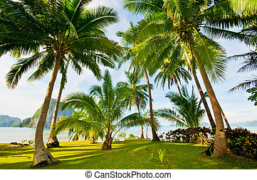 Exotic Palms Beach Resort Grounds